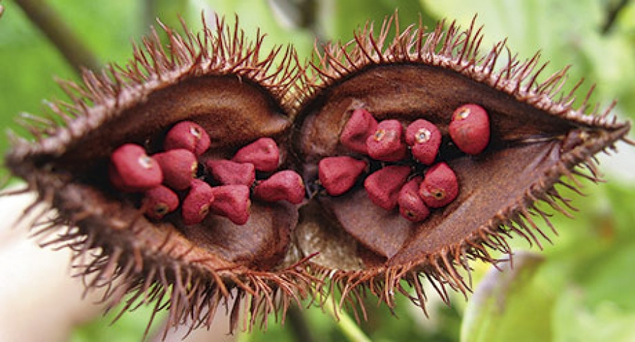 Annatto tocotrienol may fight osteoporosis