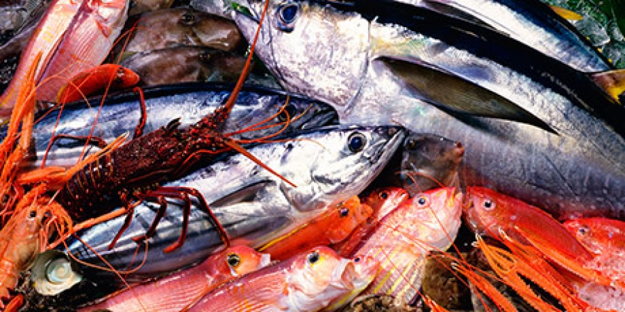 Safe Seafood Project Develops Tools for Detection of Pharmaceutical Residues