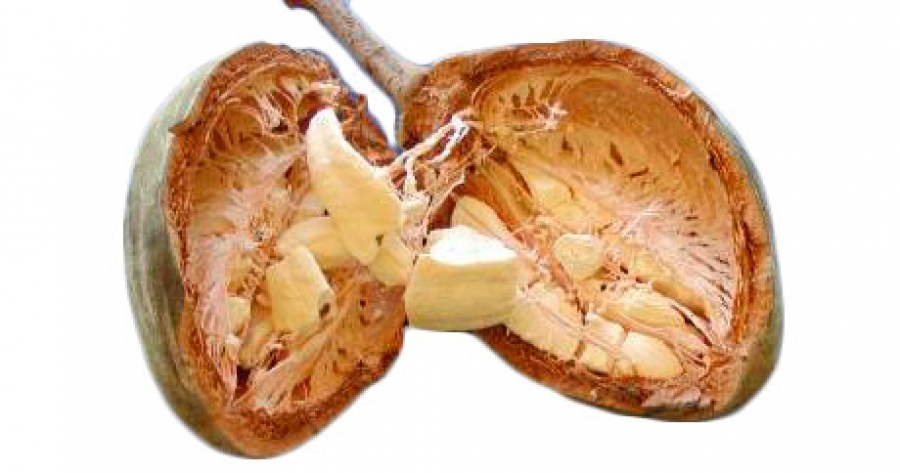 Baobab fruit reduces starch digestion and glycemic response in humans