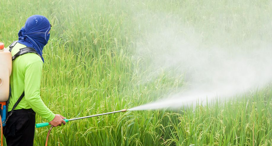 Commission Regulation EU 2016/1866 as regards maximum residue levels for certain pesticides in food
