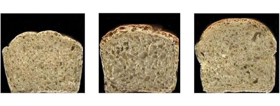 Acceptability of alginate enriched bread and its effect on fat digestion in humans