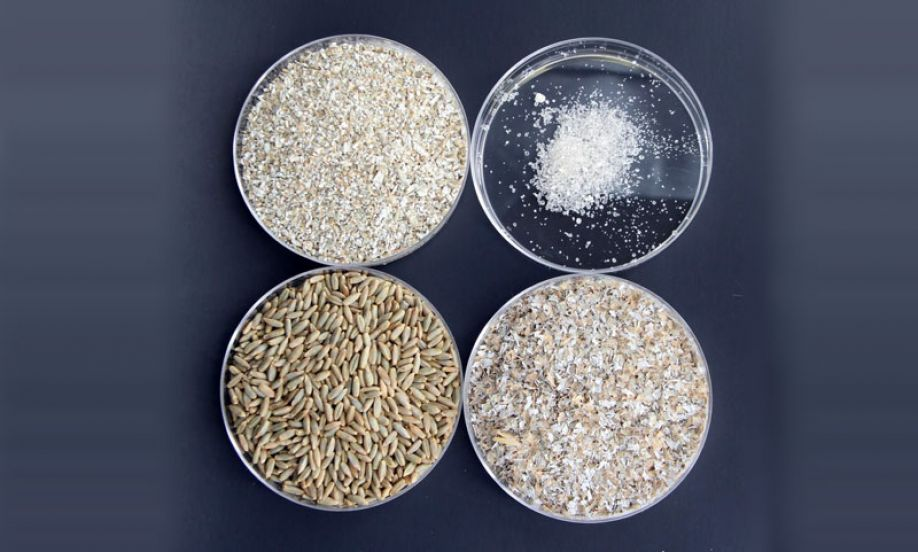 The various stages of processing rye, from berries to alkylresorcinols (top left to bottom right): rye berries, rye chops (coarsely ground rye berries), rye bran, and alkylresorcinols (extracted and purified from rye bran).