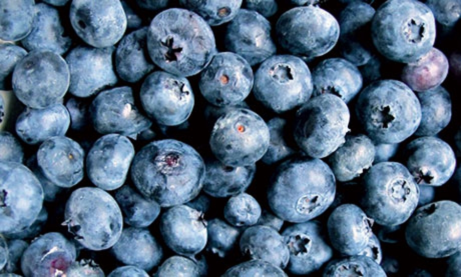 A single portion of blueberry improves protection against DNA damage