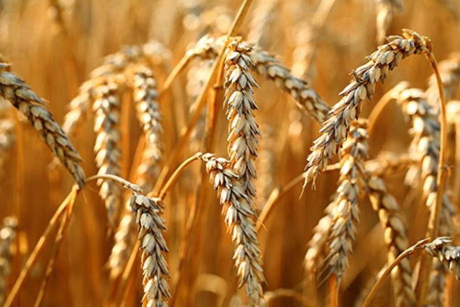 Sunopta oat fiber: cost reduction and yield improvement!