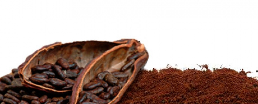 Cocoa flavanols lower blood pressure and increase blood vessel function
