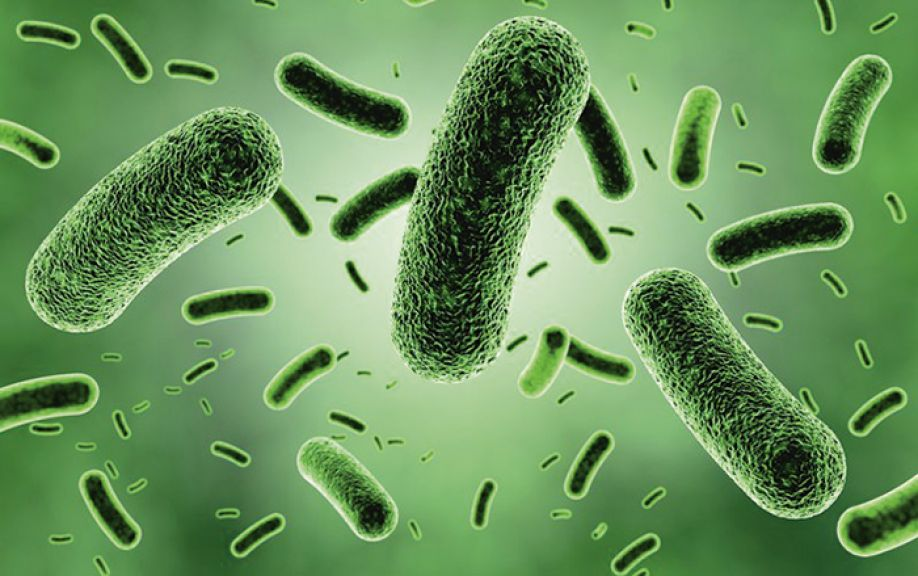 Major finding identifies nitrogen as key driver for gut health