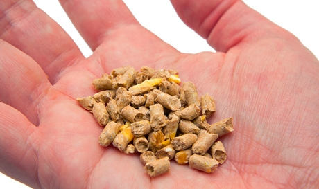 Modest growth in EU for compound feed production