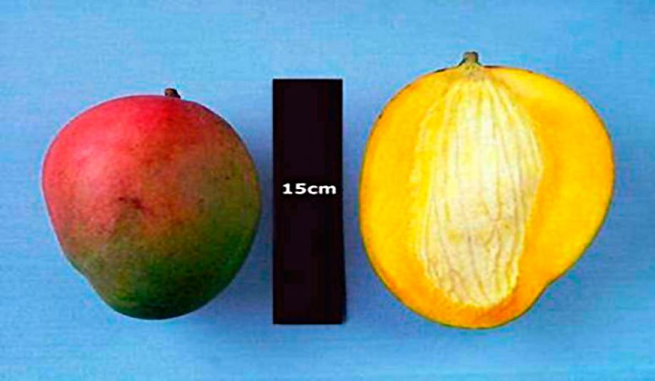 Mango consumption has positive impact on inflammatory bowel disease
