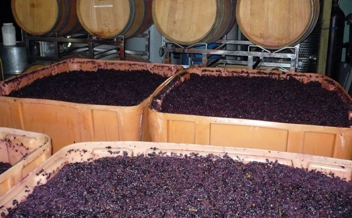 Biological effect of magnetic field on the fermentation of wine
